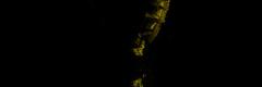 yellow common seahorse silhouette