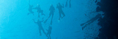 snorkelers silhouettes